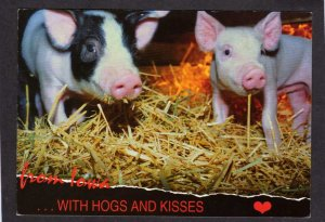 IA From Iowa with Hogs and Kisses Pigs Piglets Farming Postcard Animals Farm