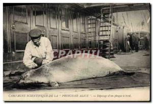 Postcard Old Country scientific Princess Alice butchering d & # 39un seal abo...