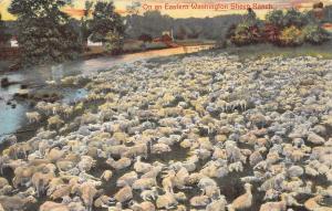 Eastern Washington~Sheep Ranch~Flock Along Creek Bank~House~1912 Entiat Cancel