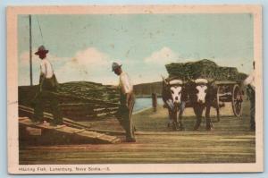 Postcard Canada Nova Scotia Lunenburg Hauling Fish Dock Scene Fishing Haul Q11