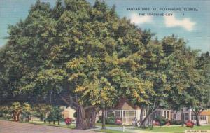 Florida St Petersburg Street Scene With Banyan Tree