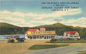 1940s Sterling Alaska Fur Farms Lake Placid New York Teich postcard 3960