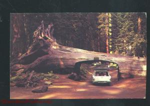 CALIFORNIA REDWOOD FOREST DRIVE THRU TREE 1958 CHEVY STATION WAGON POSTCARD