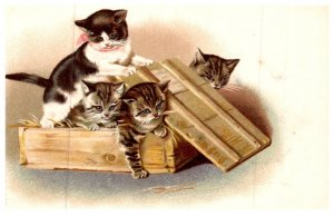 Cat , Kittens playing in wood  crate