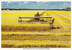 Canada Swathing Oats On The Canadian Prairies