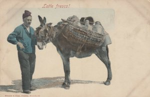 Latte Fresco! , Italy , 1901-07 ; Donkey