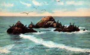 California San Francisco Seal Rocks