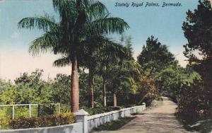 Stately Royal Palms, Bermuda, PU-00-10s