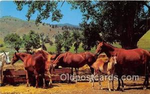 Horse Ranch Free Lance Photographers Guild, Inc Postcard Post Card Free Lance...