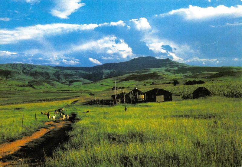 Postcard Typical Countryside, Foothills of Drakensberg, Natal, South Africa A81