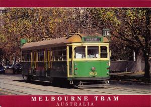Postcard 1999 Melbourne TRAM No.893 Service No.16 University Australia #M