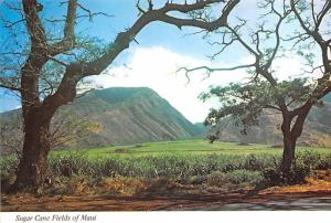Sugar Can Fields - Maui, Hawaii