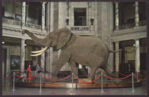 African Elephant,Smithsonian,Washington,DC Postcard