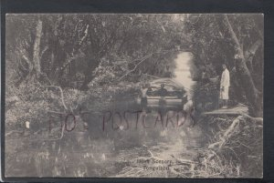 Tonga Postcard - Bush Scenery, Tongatabu  HP647