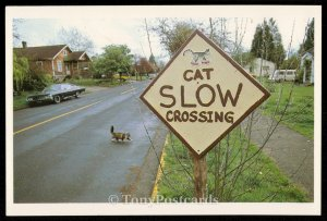 Cat Slow Crossing