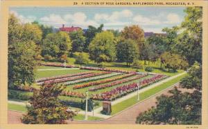 New York Rochester A Section Of Rose Gardens Maplewood Park