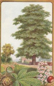 Horse Chestnut Tree , 00-10s