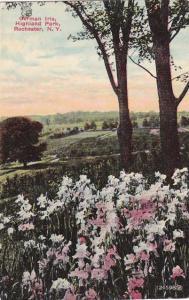 German Iris - Highland Park, Rochester, New York pm 1911