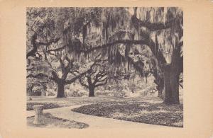 Live Oak Walk , Brookgreen Gardens , South Carolina , 20-30s