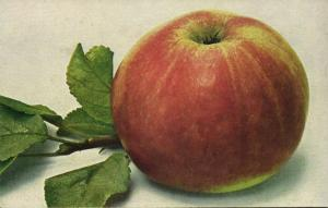 Fruit Fruits Postcard, Emperor Alexander Apple (1910s)