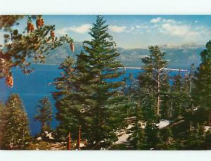 Lake Tahoe CA Giant Pine Cones Bliss State Park Evergreens Pine  Postcard # 5482