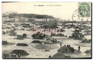 Old Postcard Cancale Sorting Oysters oyster farming