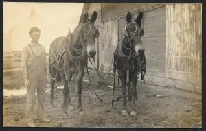 Young Man & Two Horses at Barn RPPC Unused c1910s