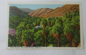 Palm Springs, CALIF ~  Palms Canyon - Stephen H Willard Linen Postcard Blank