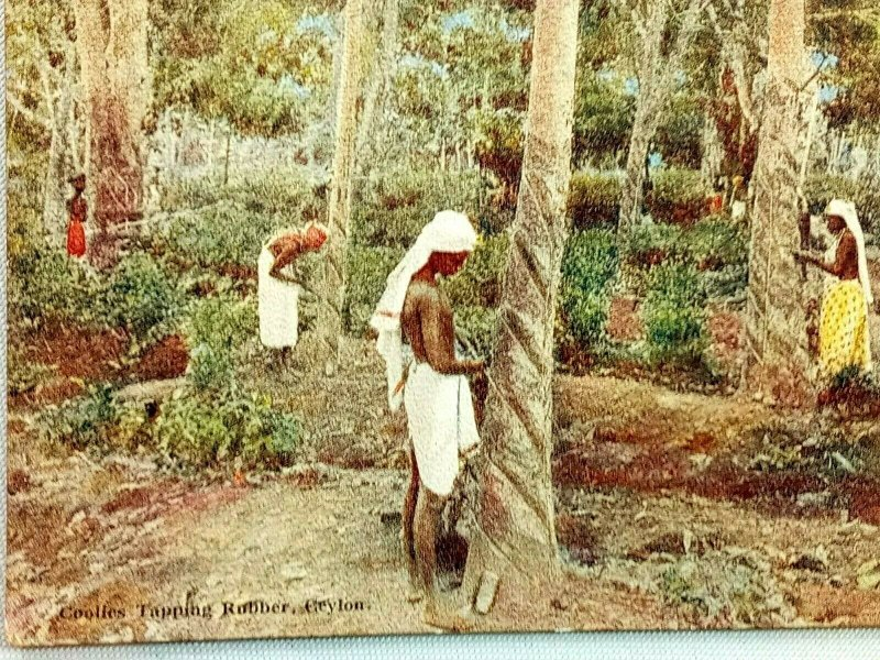 Vintage Postcard 1910's Coolies Tapping Rubber Trees Ceylon
