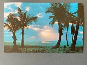 Palm Trees FL Chrome Postcard A1198085943