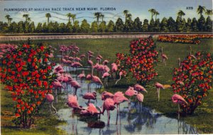 [ Linen ] US Florida Miami - Hialeah Flamingoes