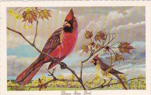 Cardinal Illinois State Bird