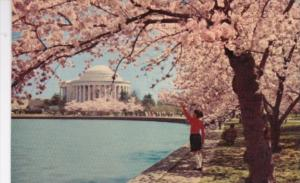 Washington D C The Jefferson Memorial At Cherry Blossom Time 1964