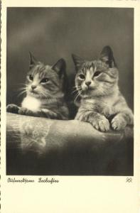 Cat Postcard Kittens (1930s) RPPC (5)