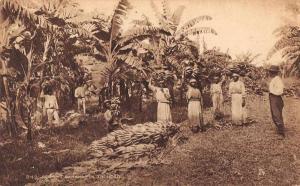 Trinidad Reaping Bananas Plantation Scene Tuck Vintage Postcard JD933768