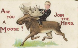 Are you a Moose? , Join the Herd , 00-10s