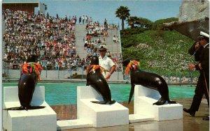 Postcard CA Rancho Palos Verdes Marineland Of The Pacific Seals BL*