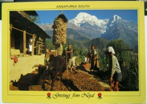 Nepal Annapurna South Villagers of Chandrung beat Barley - unposted