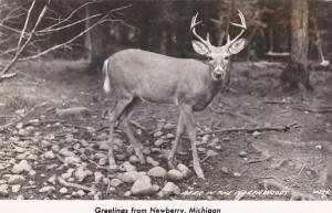 RP: Deer in the North Woods , NEWBERRY , Michigan , 30-40s