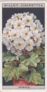 Wills Vintage Cigarette Card Flower Culture In Pots No 40 Primula  1925