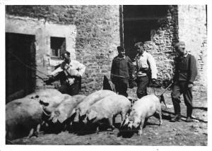 Siegburg Herz des Rhein Sieg Kreises Pigs Farm