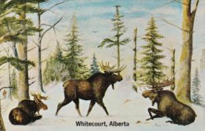 Canada Moose Country Whitecourt Alberta