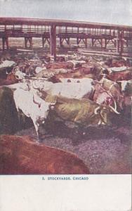Illinois Chicago Cattle At The Stockyards