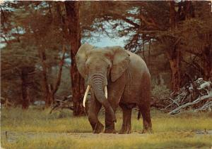 BG14219 elephant animal animaux elephant uganda