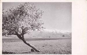 Spring Flowers & Snow , Malatya , Turkey , 10-20s