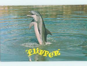 Pre-1980 FLIPPER DOLPHIN AT SEAQUARIUM Miami Florida FL AF9476@