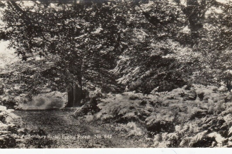 RP: ESSEX , England ,1910s; Ambersbury Banks, Epping Forest