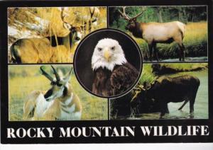 Colorado Rocky Mountain Wildlife