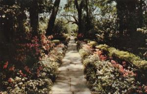 Alabama Mobile Bellingrath Gardens Path Lined With Camellias and Azaleas