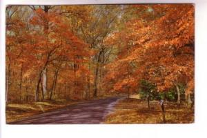 Autumn Leaves, Colour Photo, Published in Boston Massachusetts